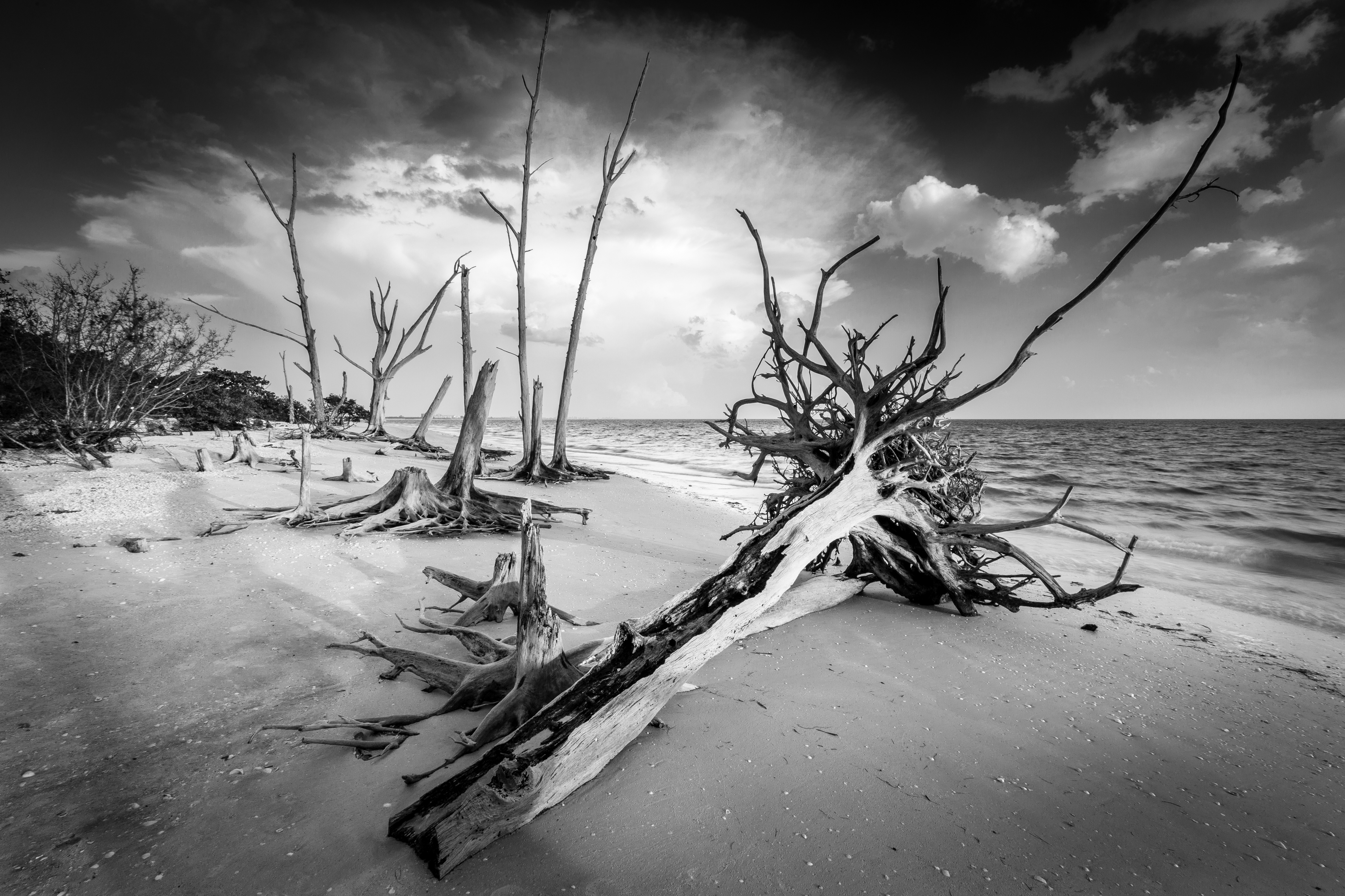 Lovers Key State Park Black and White